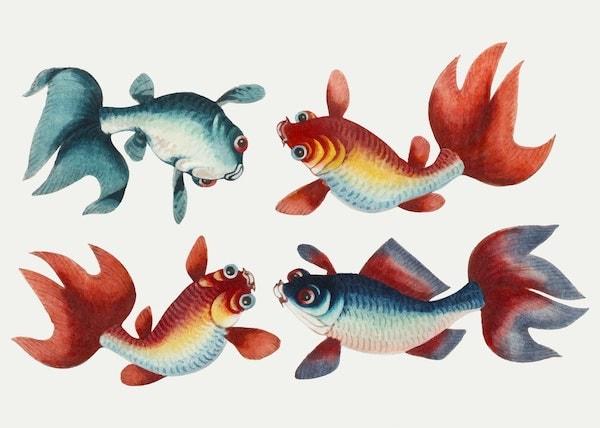 Chinese painting of 4 goldfish